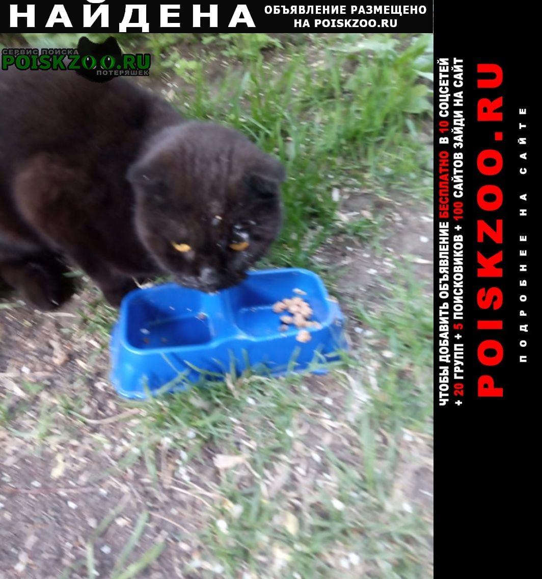 Найден кот Барнаул
