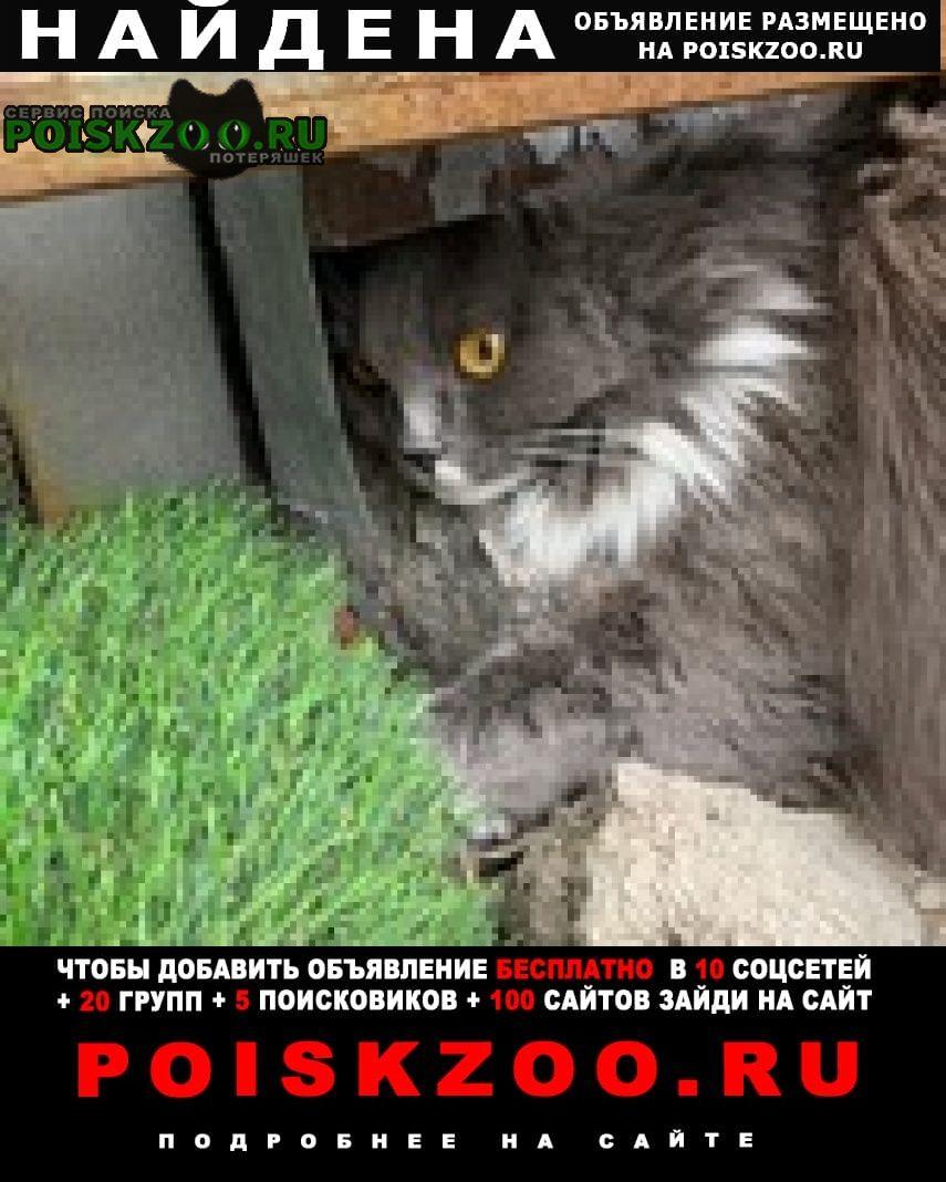 Найден кот домашний Москва