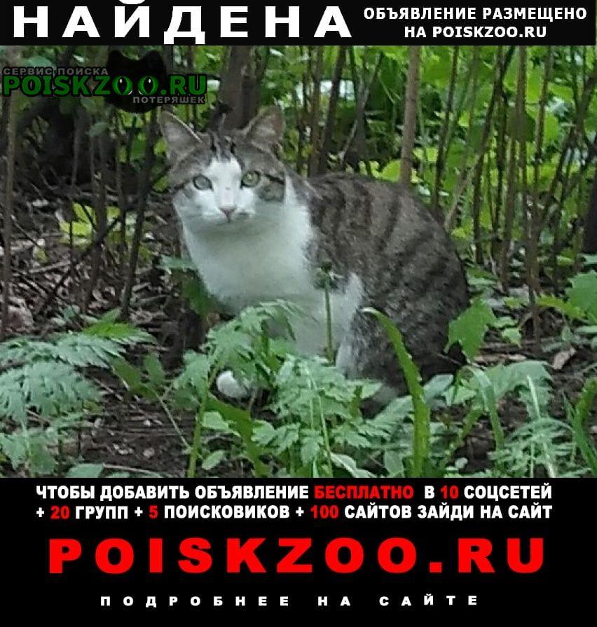 Найдена кошка (кот) г, мо. Истра