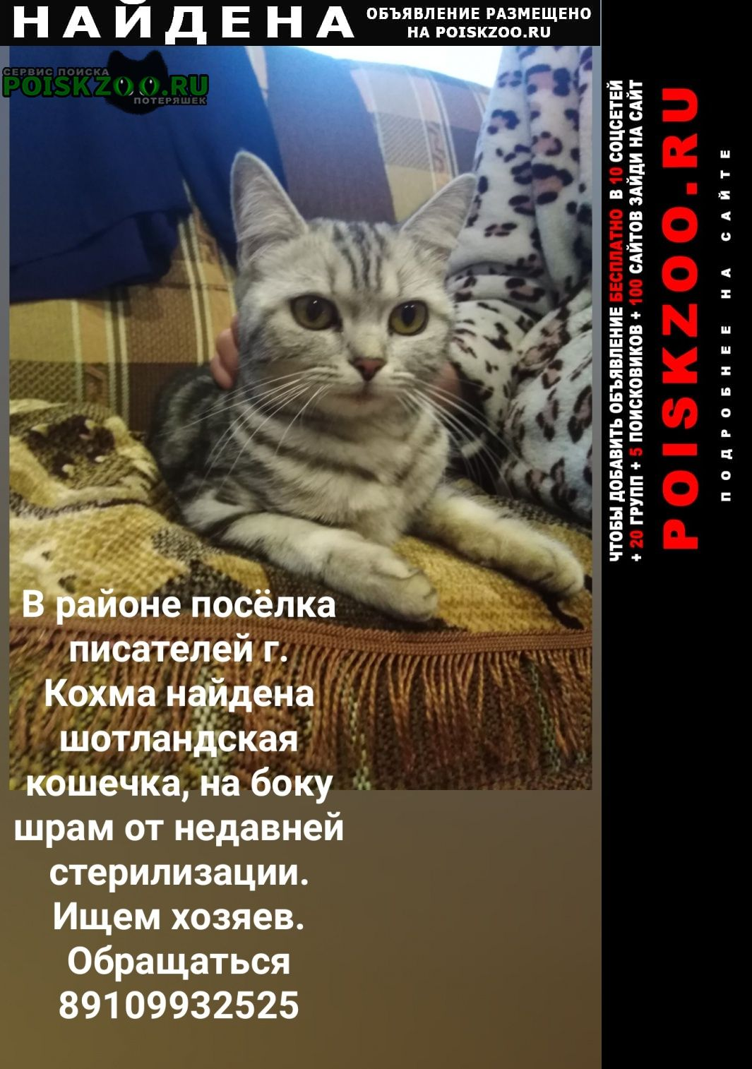 Найдена кошка Кохма