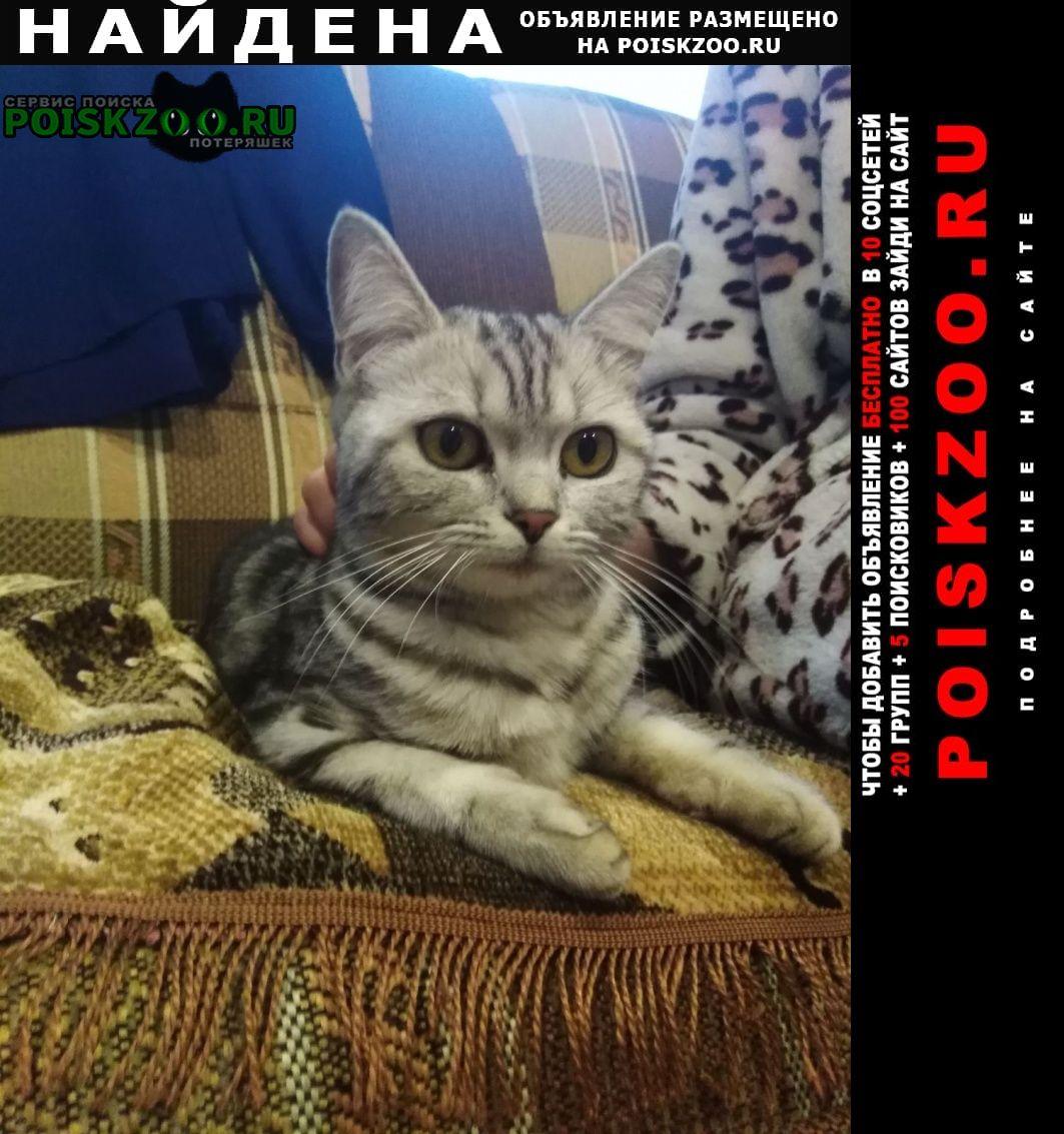 Найдена кошка шотландец Кохма