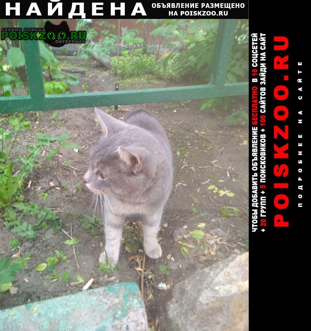 Найдена кошка ул космонавта волкова, кот в ошейнике Москва
