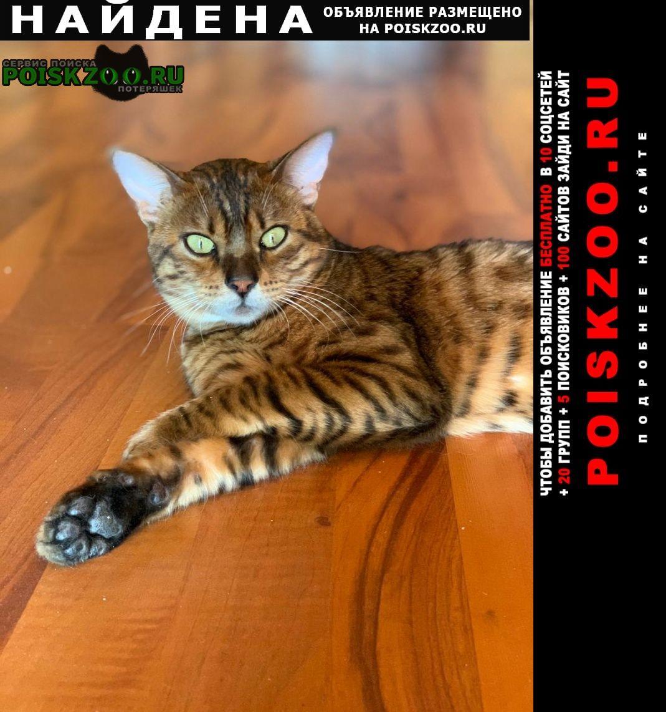 Найден кот бенгал, Москва