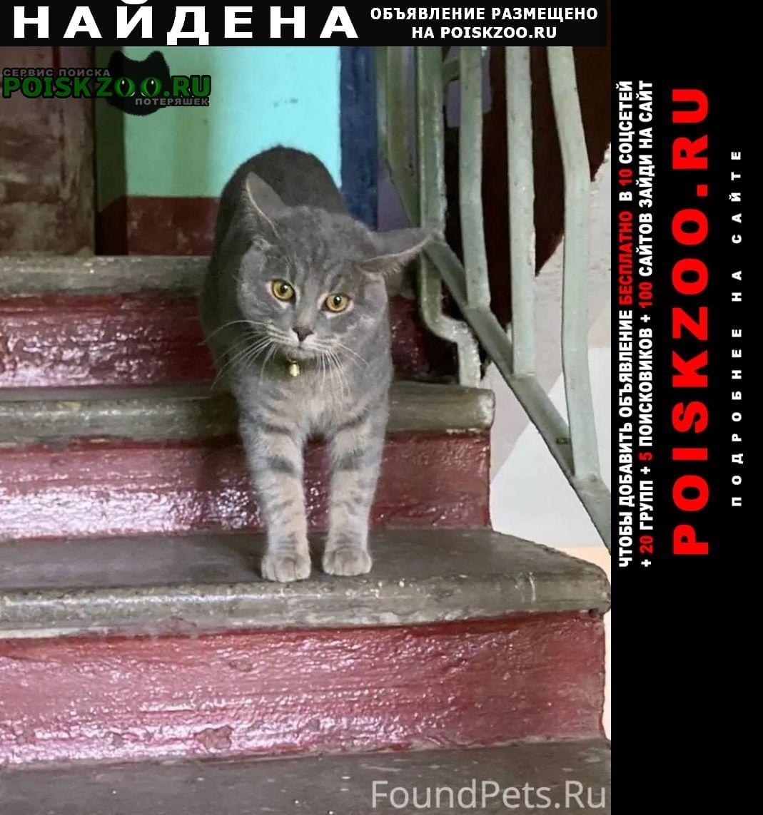 Найдена кошка кот, в ошейнике красном Москва