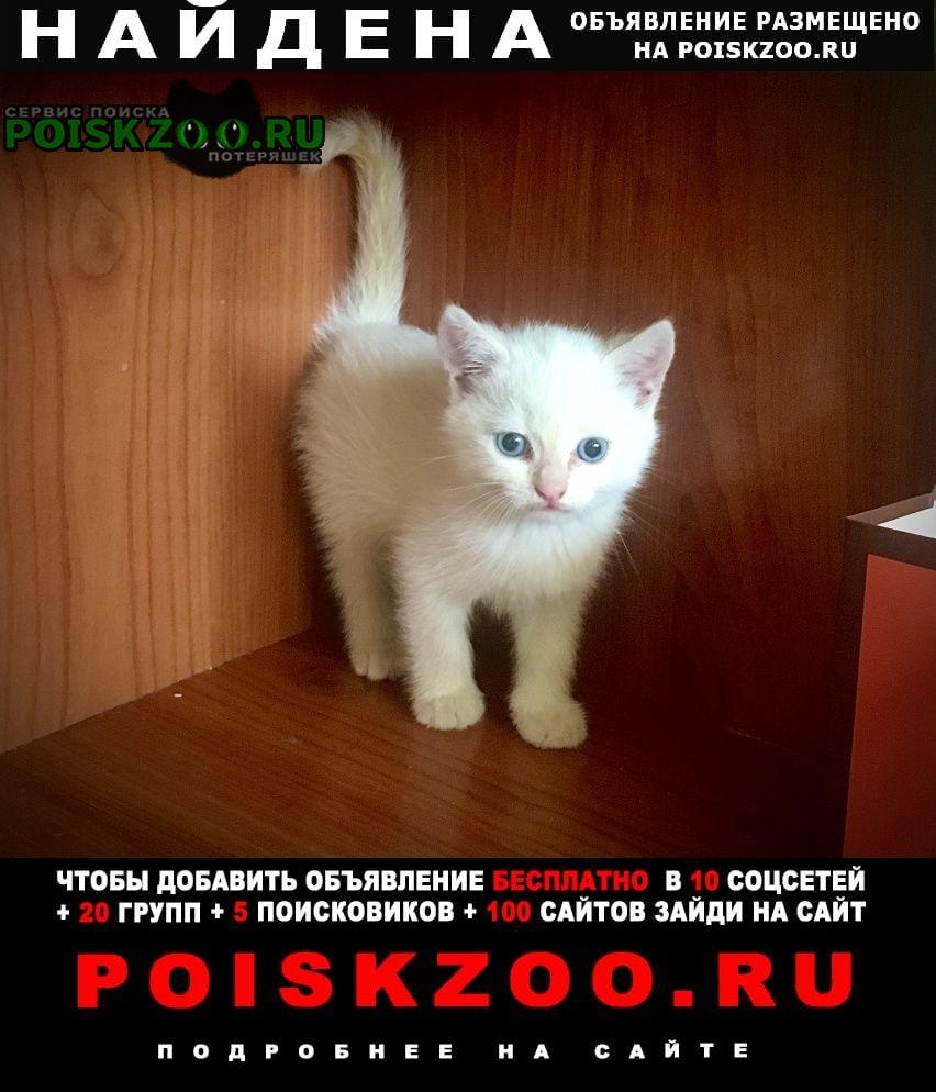 Найдена кошка очень красивая и умненькая девочка Краснодар