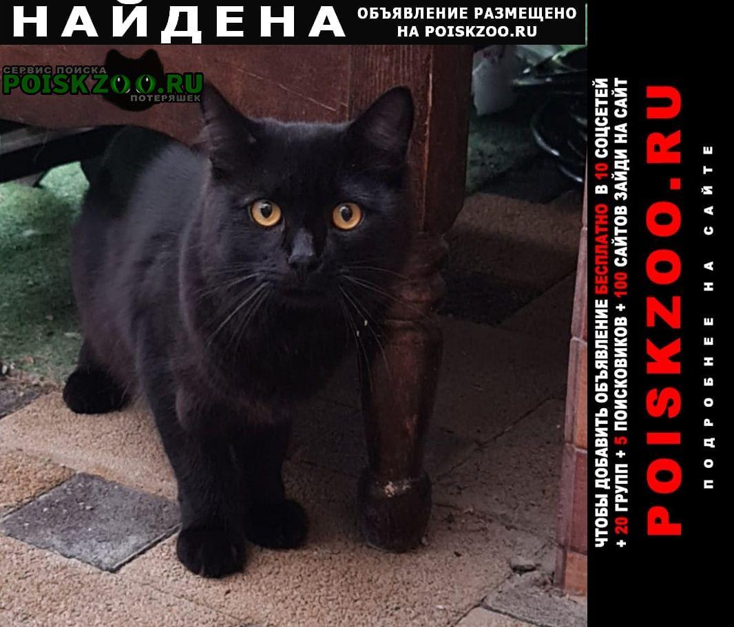 Найдена кошка район кирилла россинского Краснодар