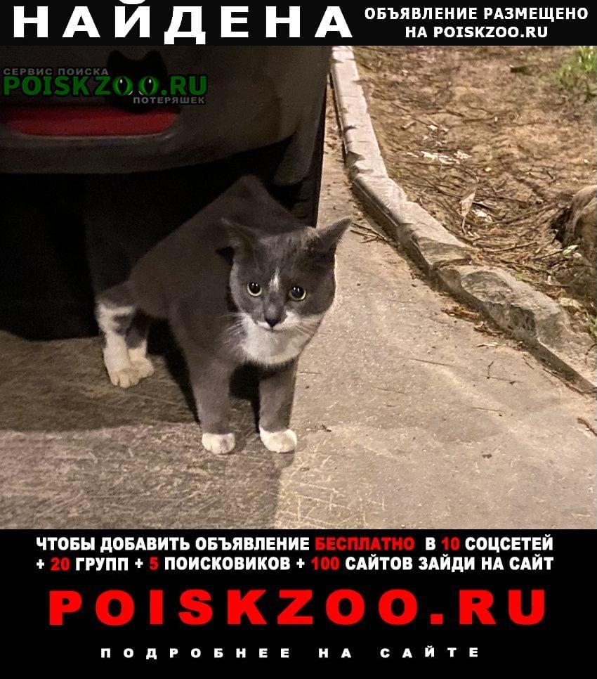 Найдена кошка кот или Москва