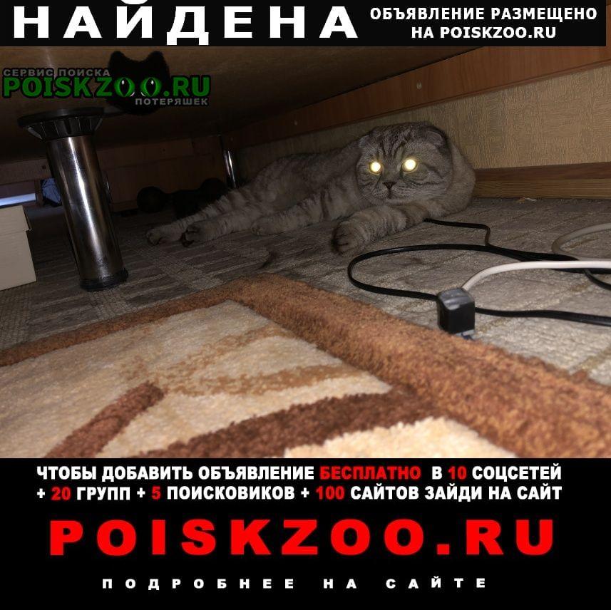 Найдена кошка Новочебоксарск