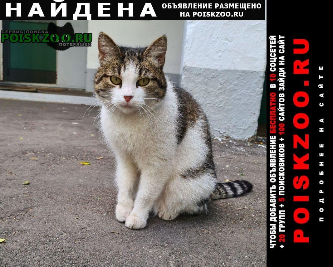 Найдена кошка речной вокзал Москва