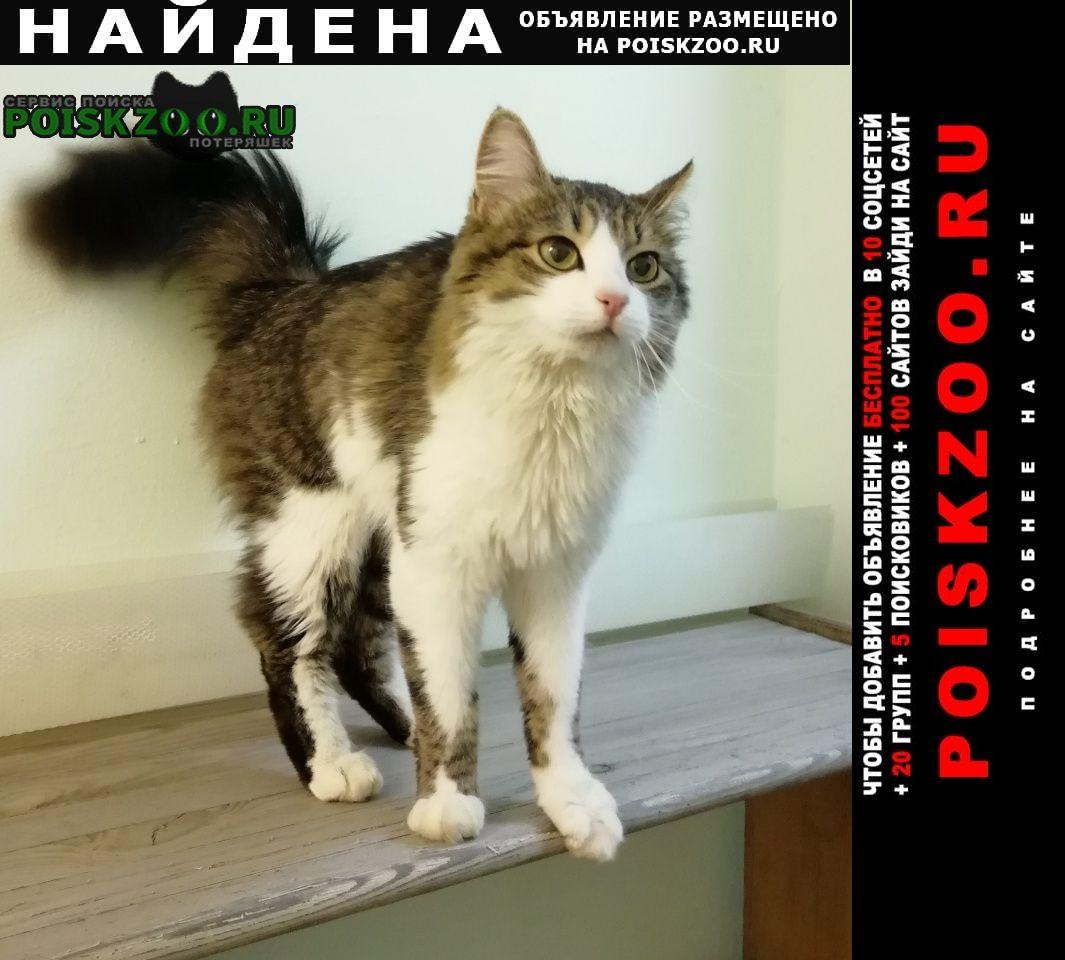 Найдена кошка худая, высокая Москва