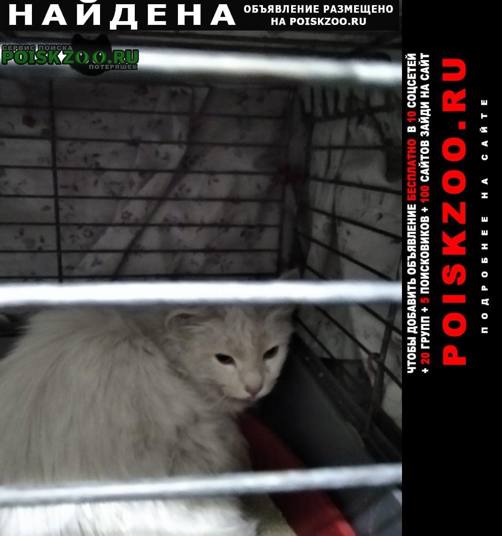 Найдена кошка в подвале дома на клочков пер. д.42 Санкт-Петербург
