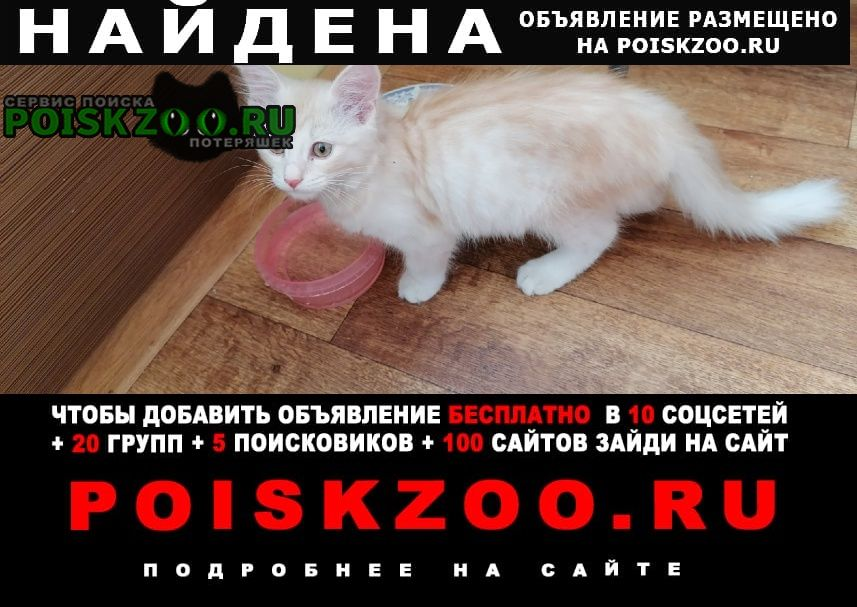 Найдена кошка чистая, домашняя. Самара