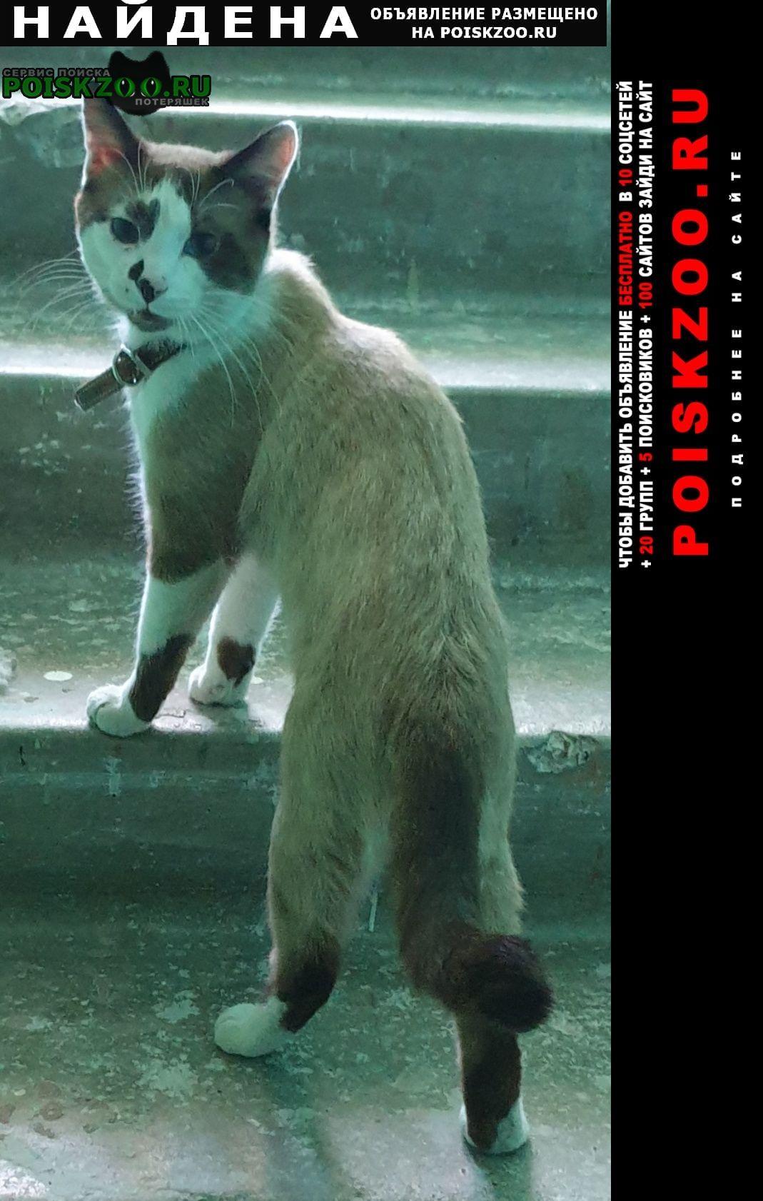 Найден кот Уфа