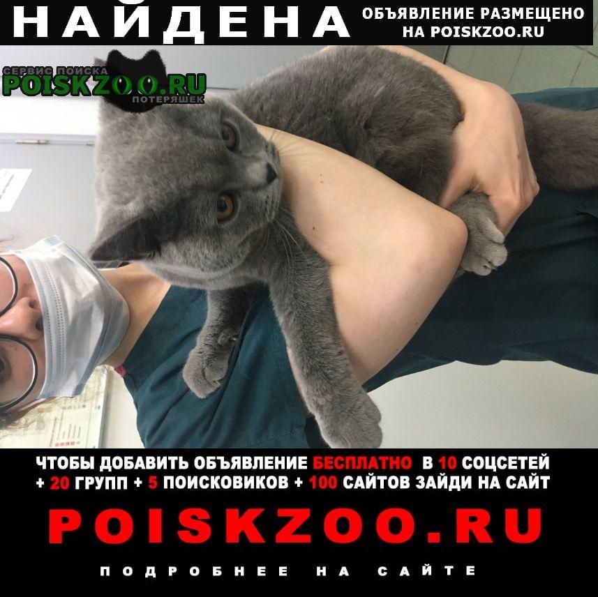 Найден кот. черемушки. Москва