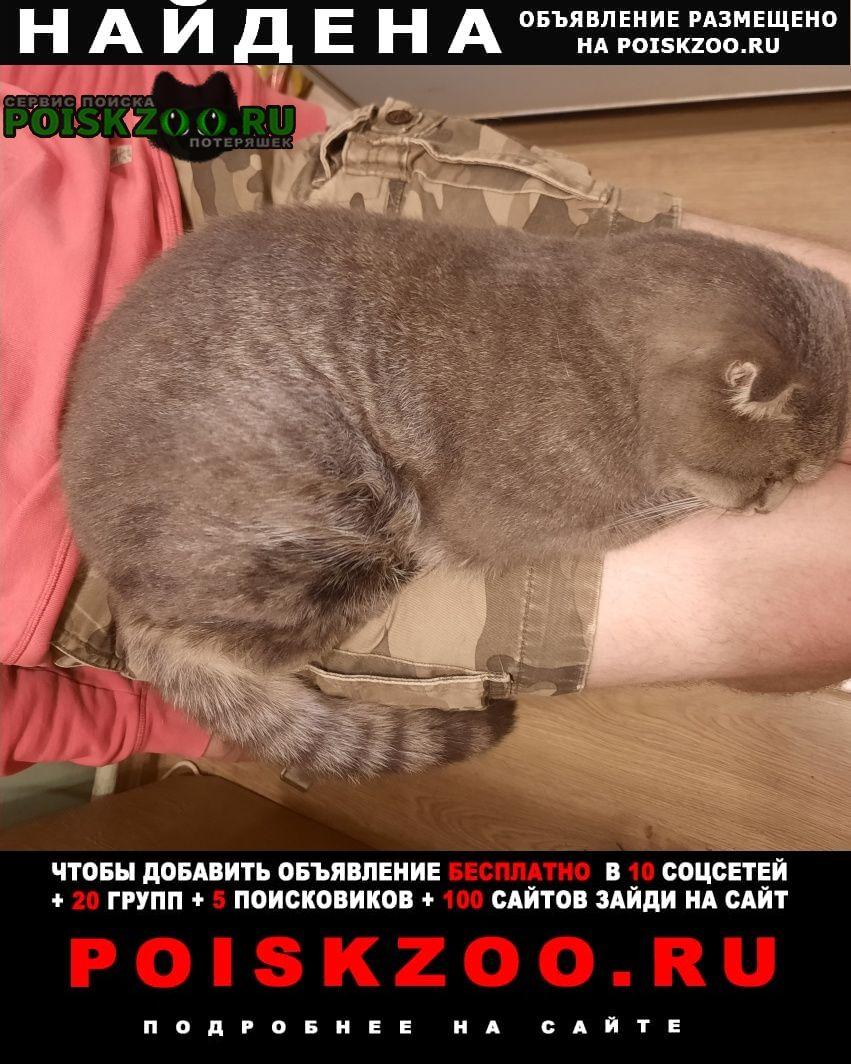Найден кот северное измайлово, Москва