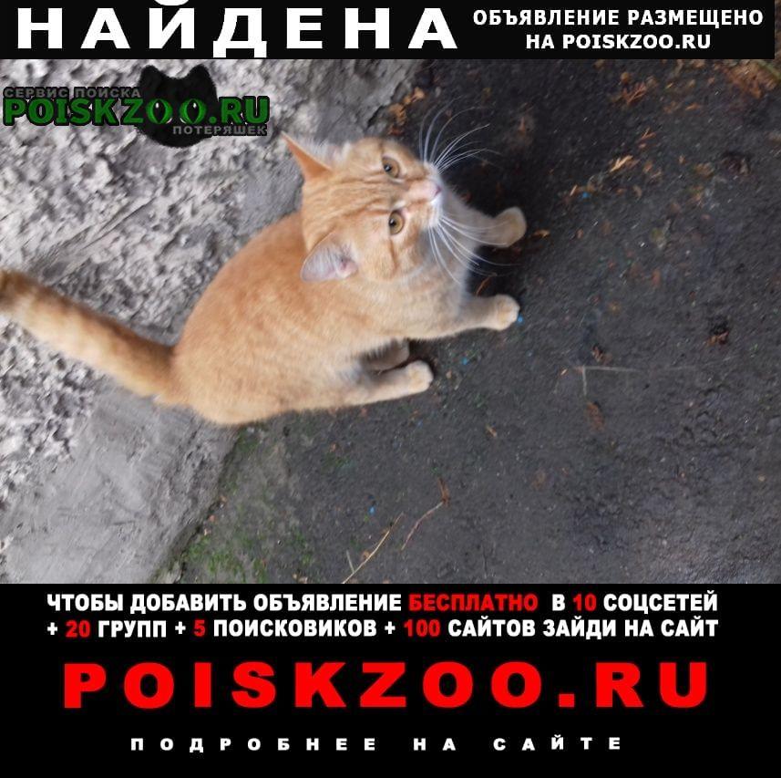 Найден кот Малоярославец