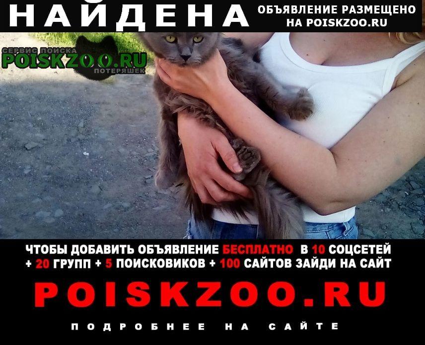 Найдена кошка длинношерствная серая Томск