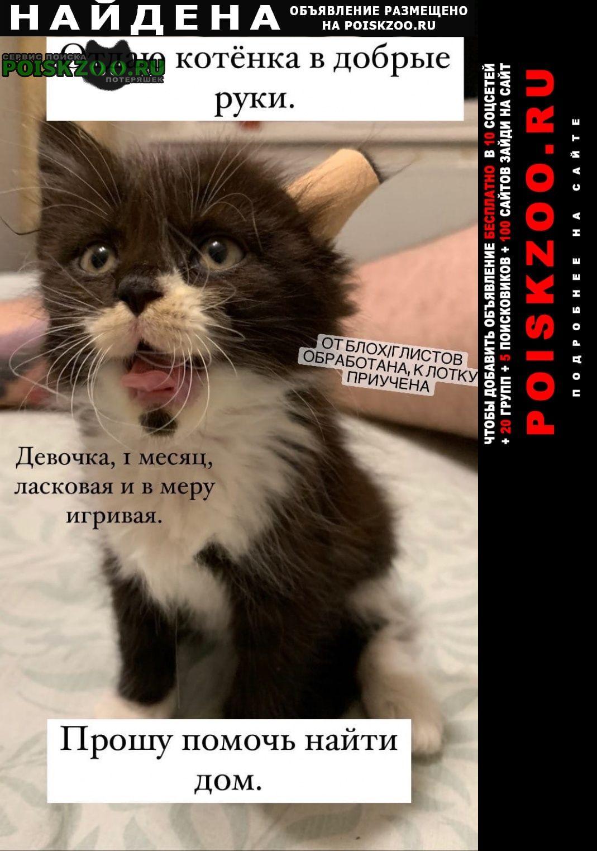 Найдена кошка помогите найти дом Краснодар