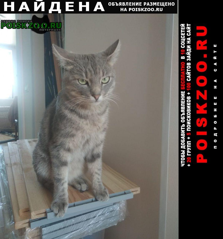 Найден кот у кого ? Москва