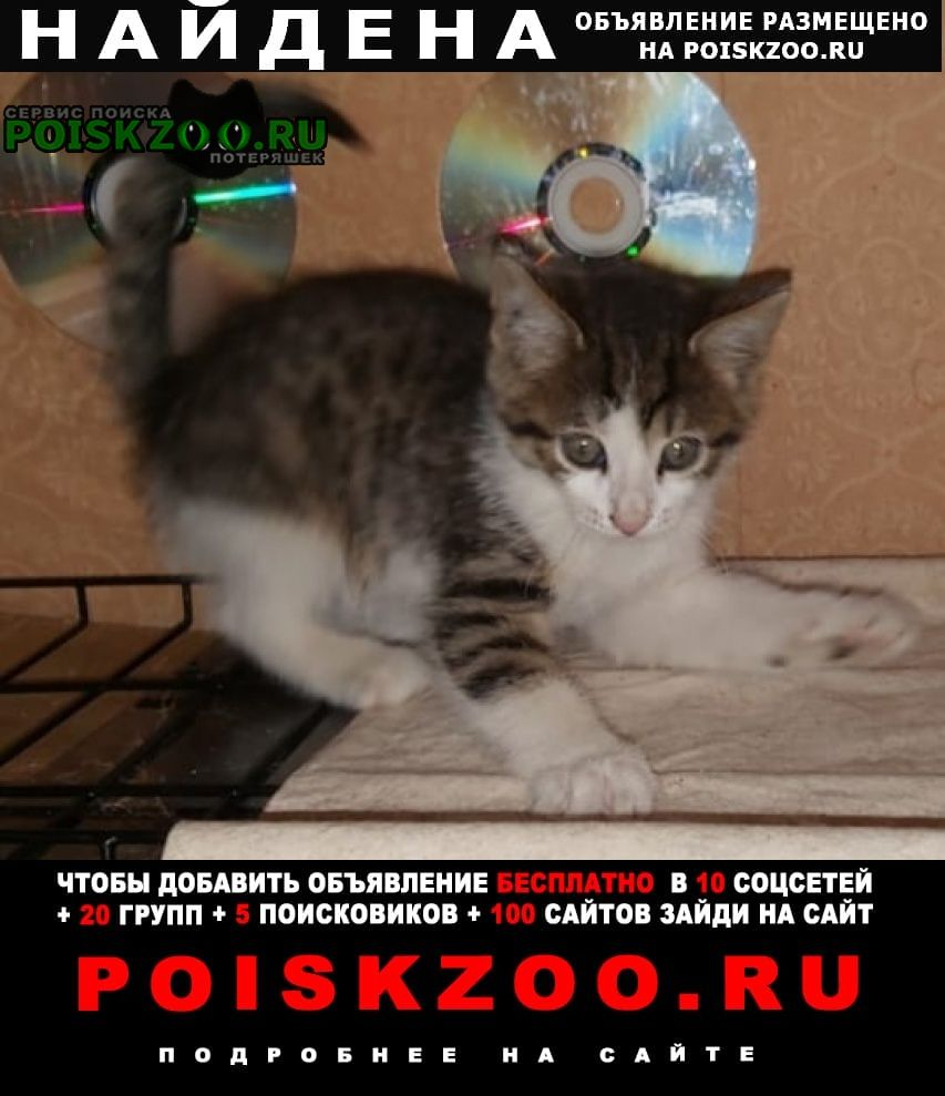 Найдена кошка котёнок-девочка 2мес. Москва