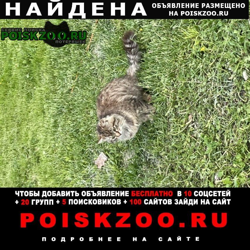 Найдена кошка маклино/лесничество Малоярославец