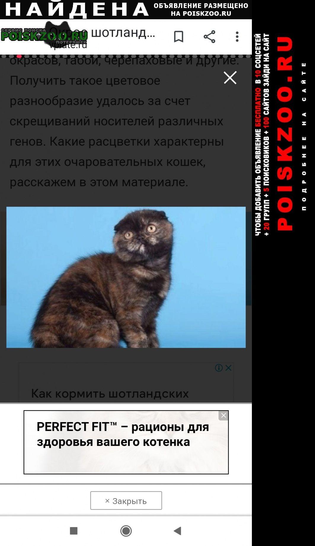 Найдена кошка Уфа