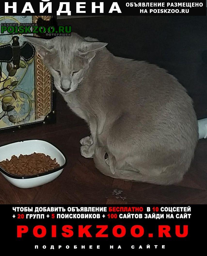Найдена кошка Пушкин