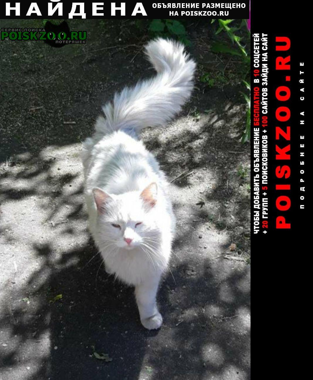 Найдена кошка Рыбинск