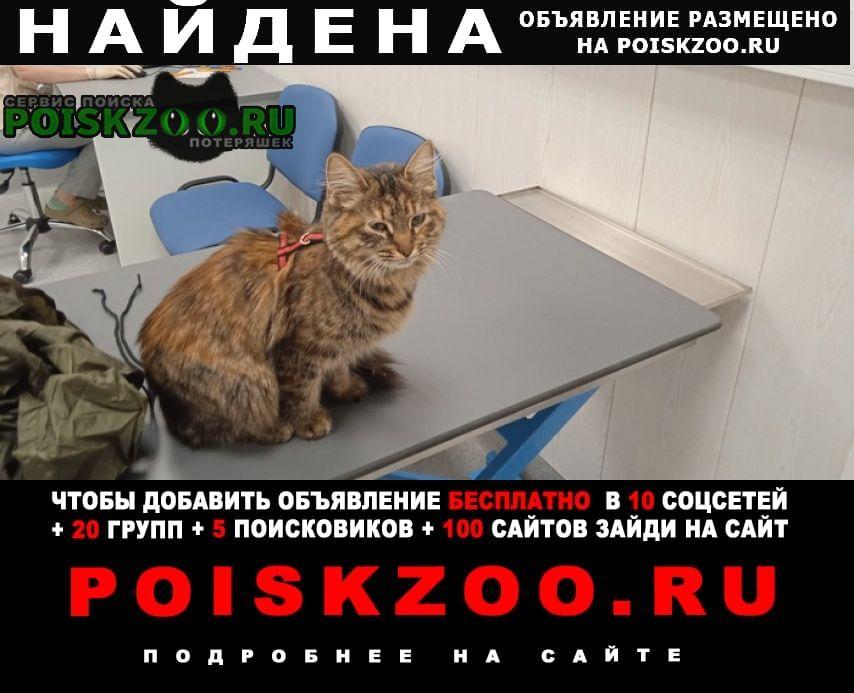 Найдена кошка на красной шлейке Санкт-Петербург