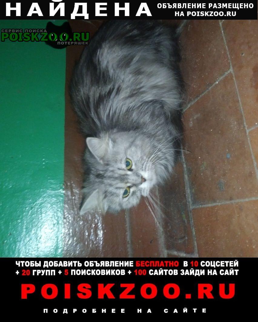 Найдена кошка Воронеж