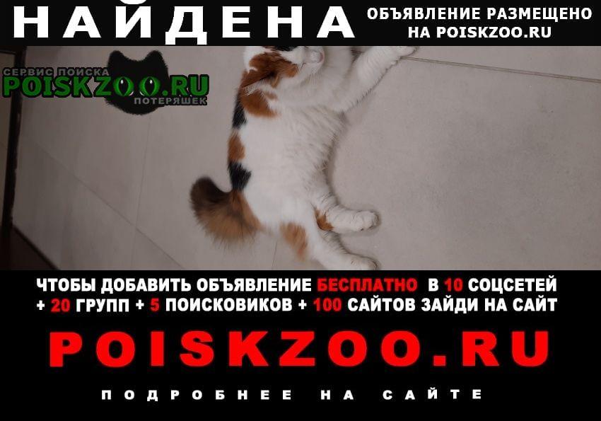 Найдена кошка кот или. / сириус. Адлер
