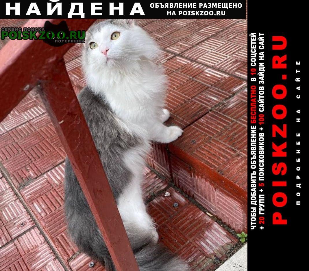 Найдена кошка бело-серая, пушистая Реутов