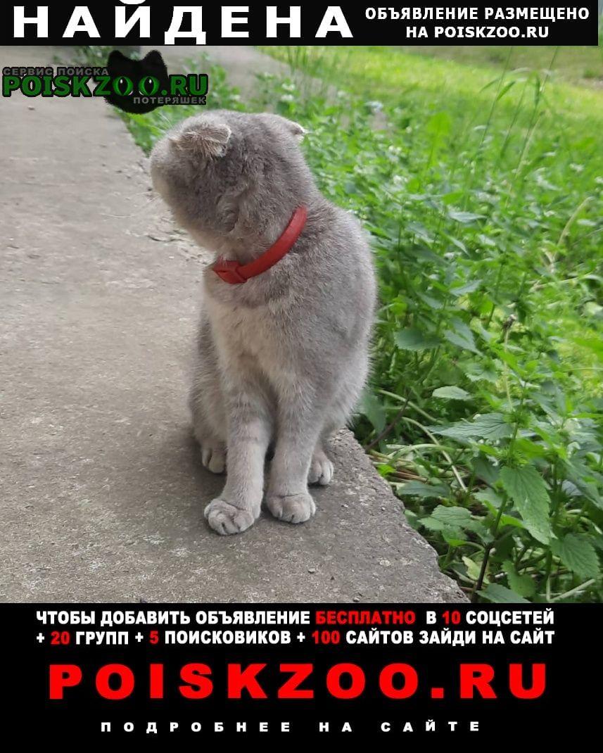 Найдена кошка потеряшка люблино Москва