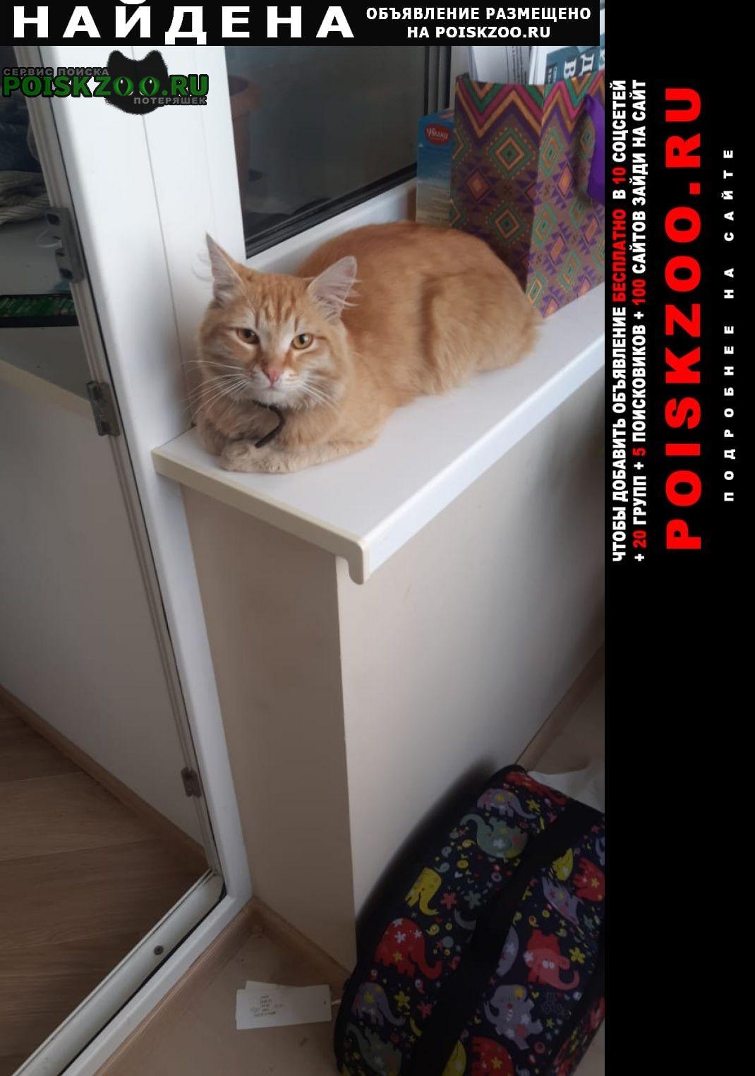 Найден кот ( ) Томск