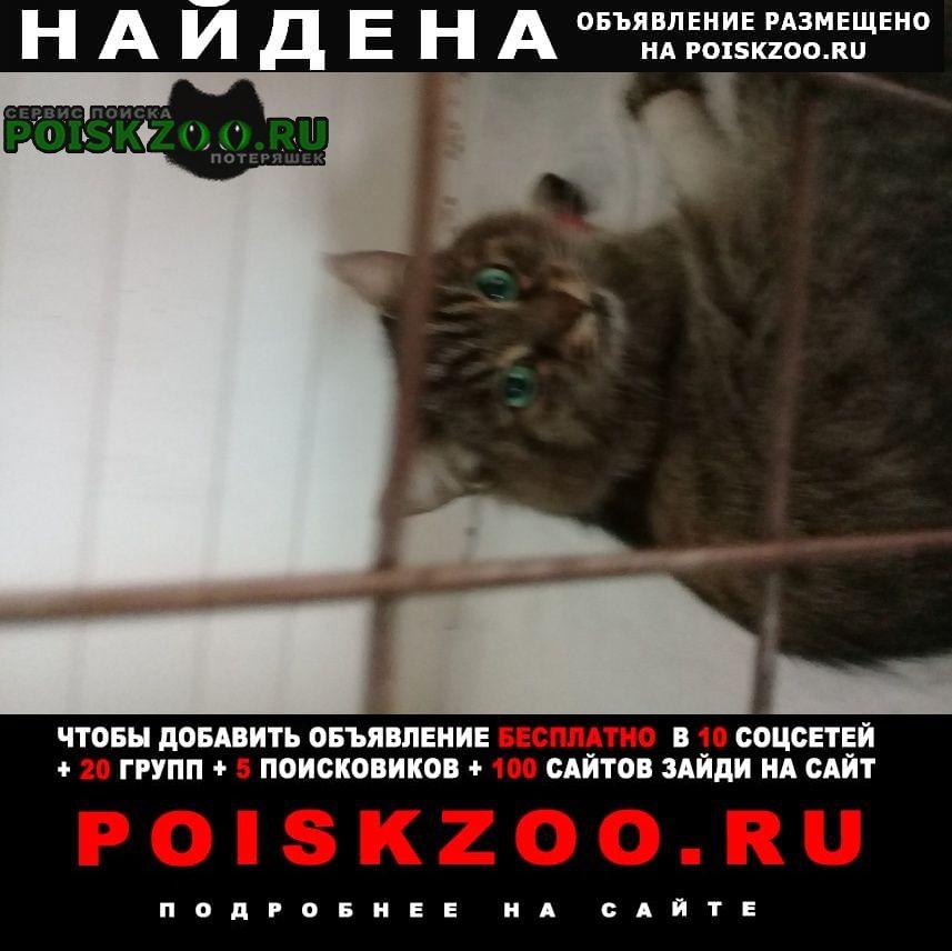 Найдена кошка 4.06 в районе отрадное Москва
