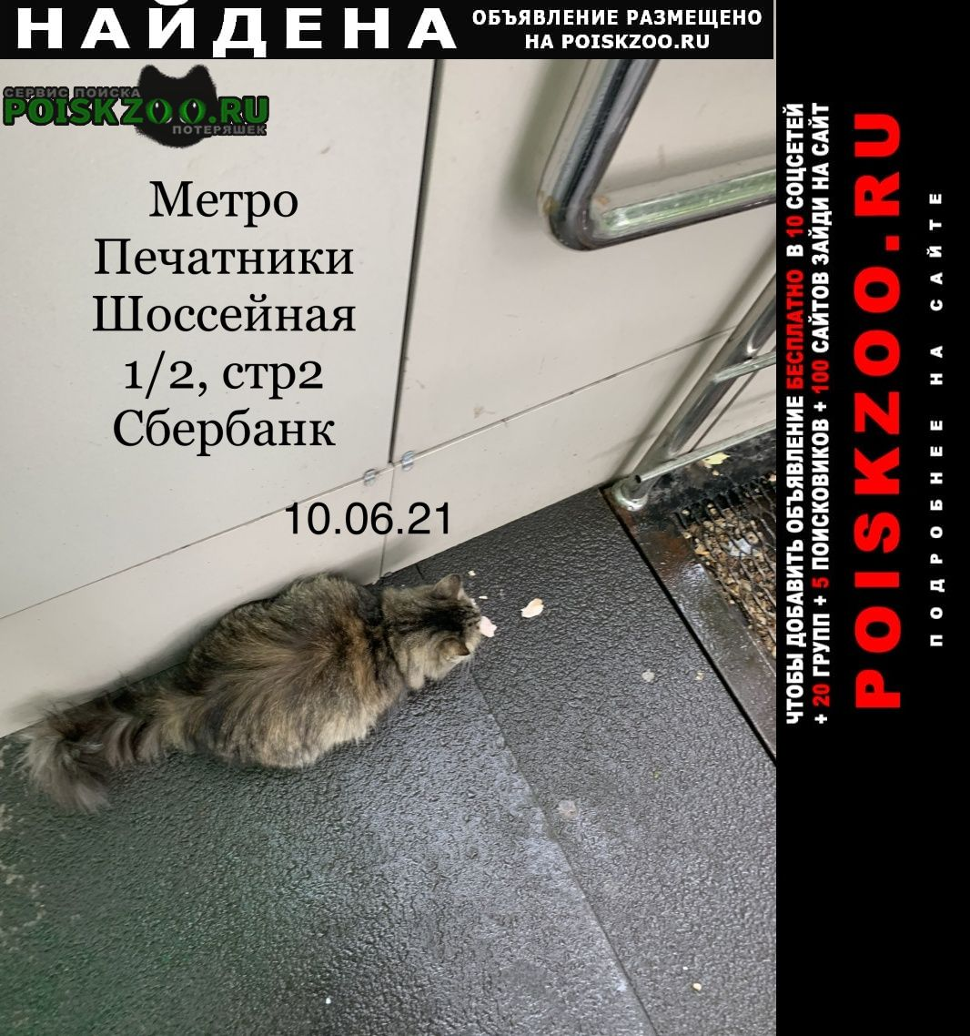 Найдена кошка кошечка Москва