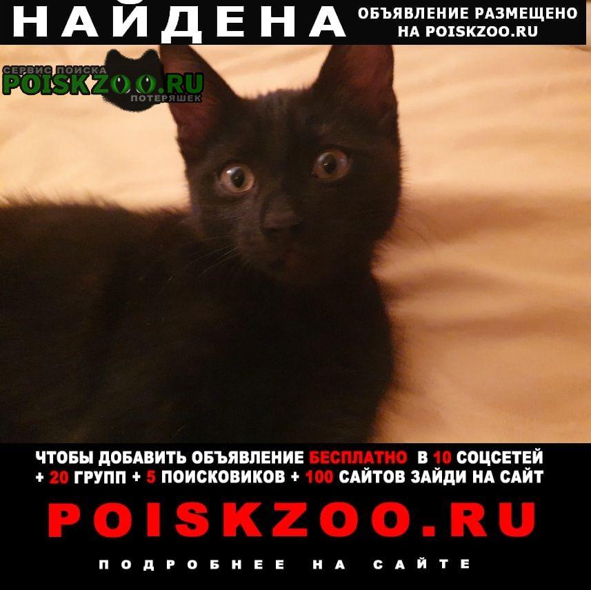 Домодедово Найден кот