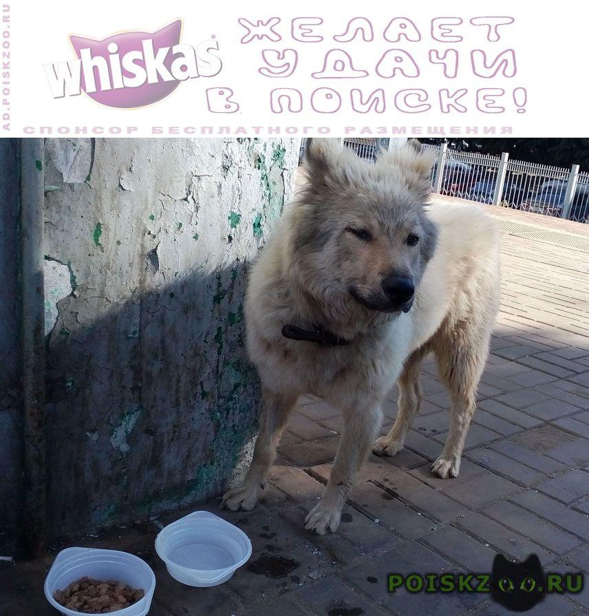 Найдена собака  пл. фабричная г.Раменское