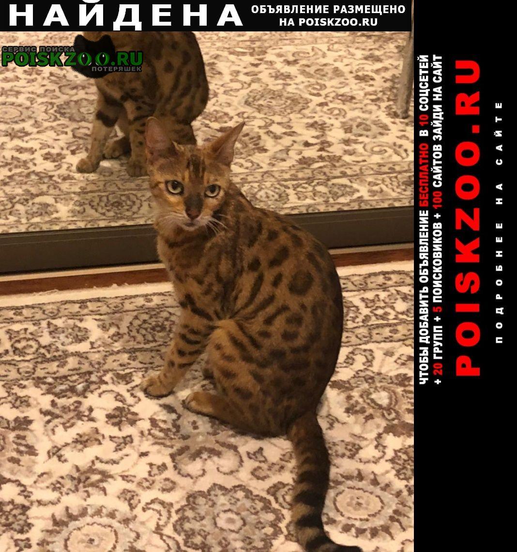 Найдена кошка ищем хозяина Аксай (Ростовская обл.)