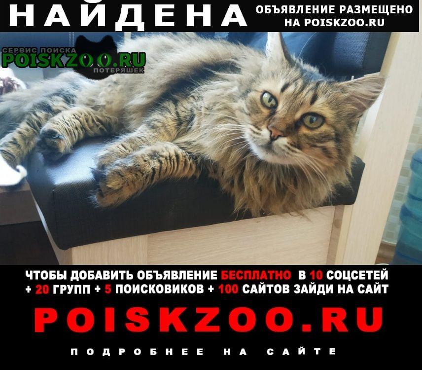 Найдена кошка хорошево-мневники Москва