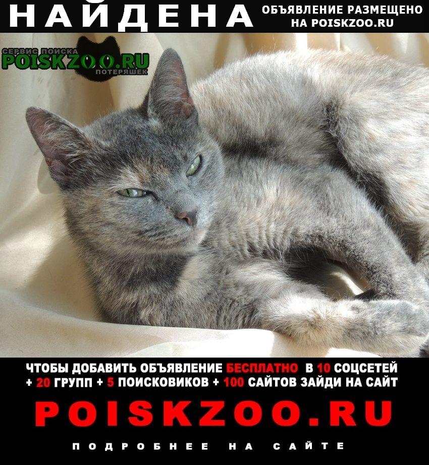 Найдена кошка район раменки, университетский проспект Москва