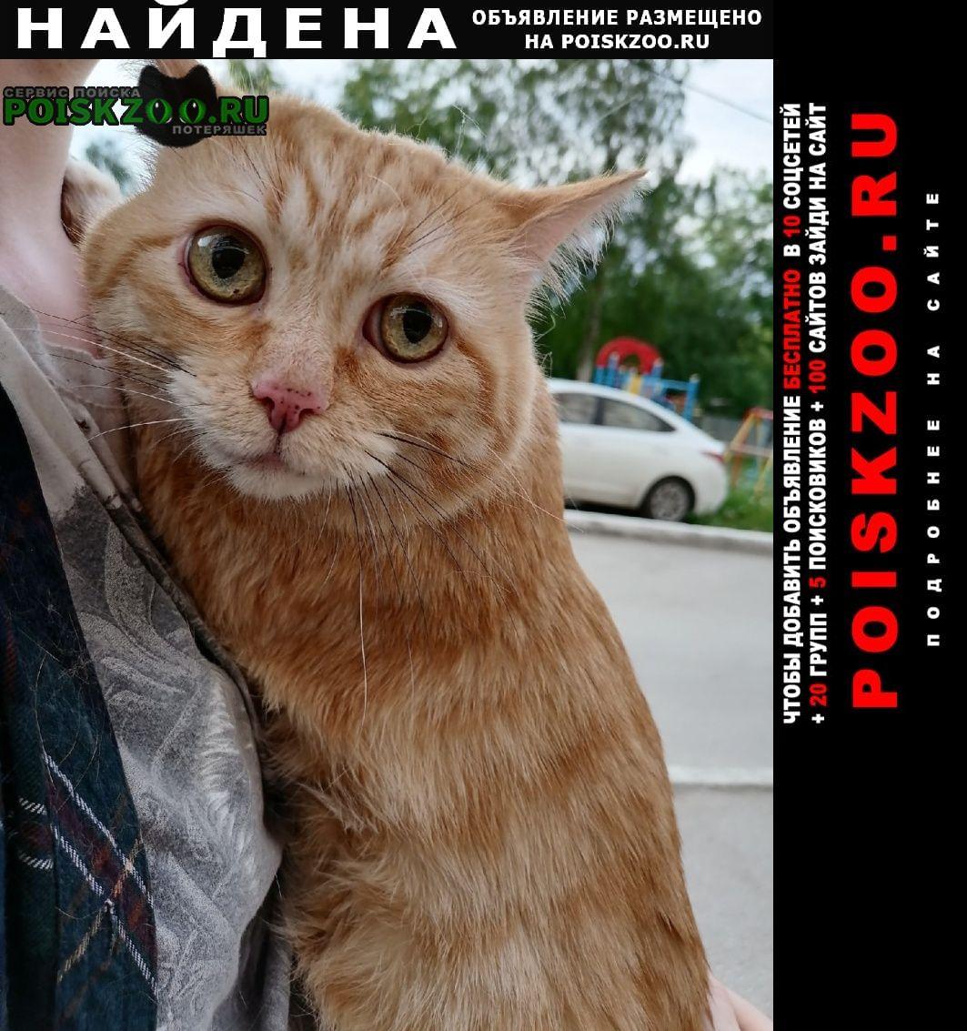 Найден кот рыжий Пермь