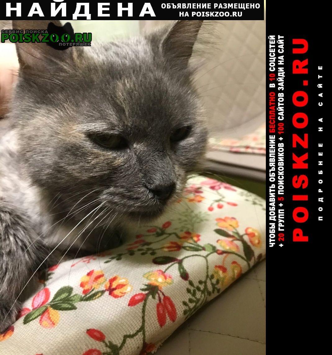 Найдена кошка серая со стрижкой Москва