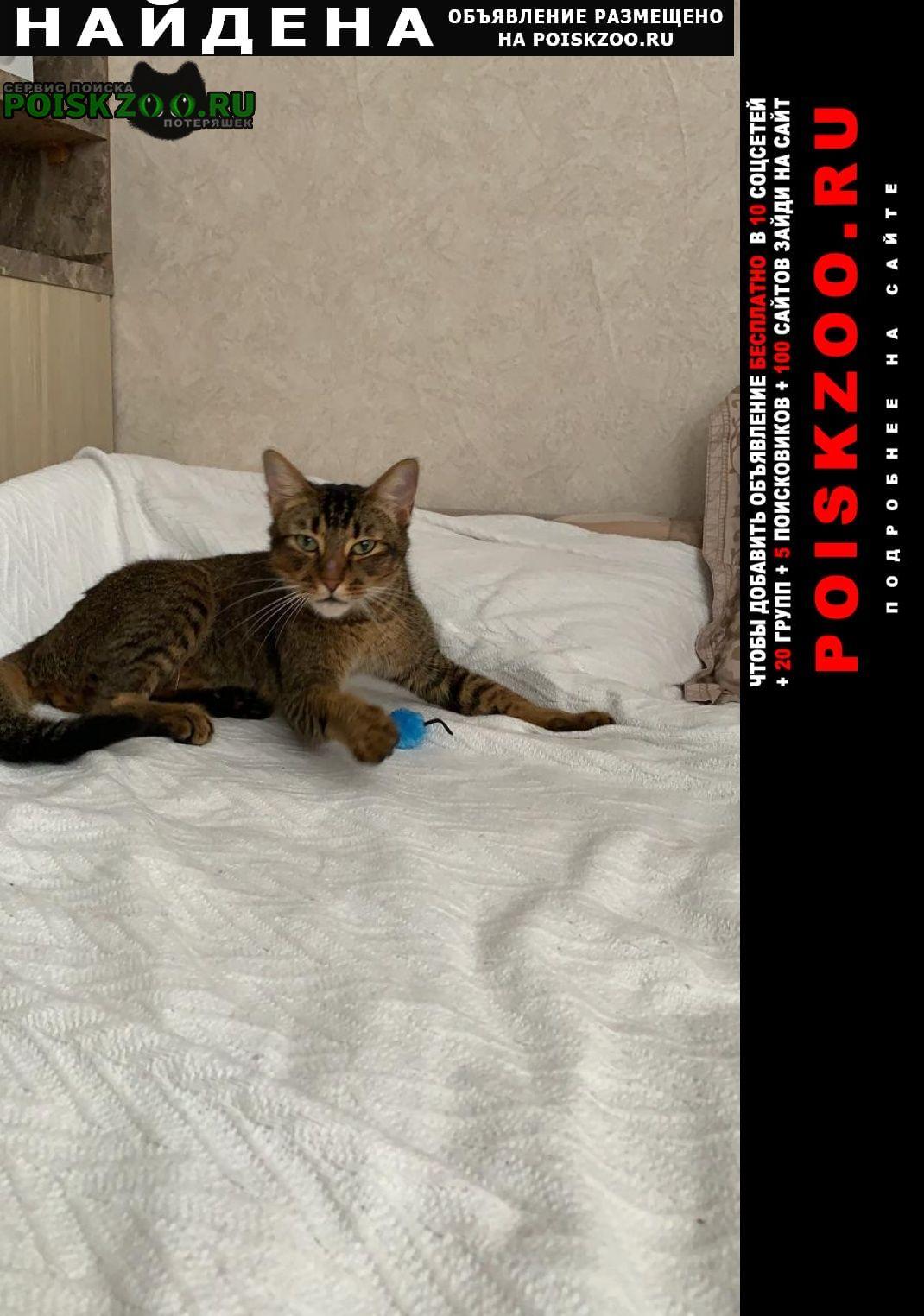 Найден кот. ольга Краснодар