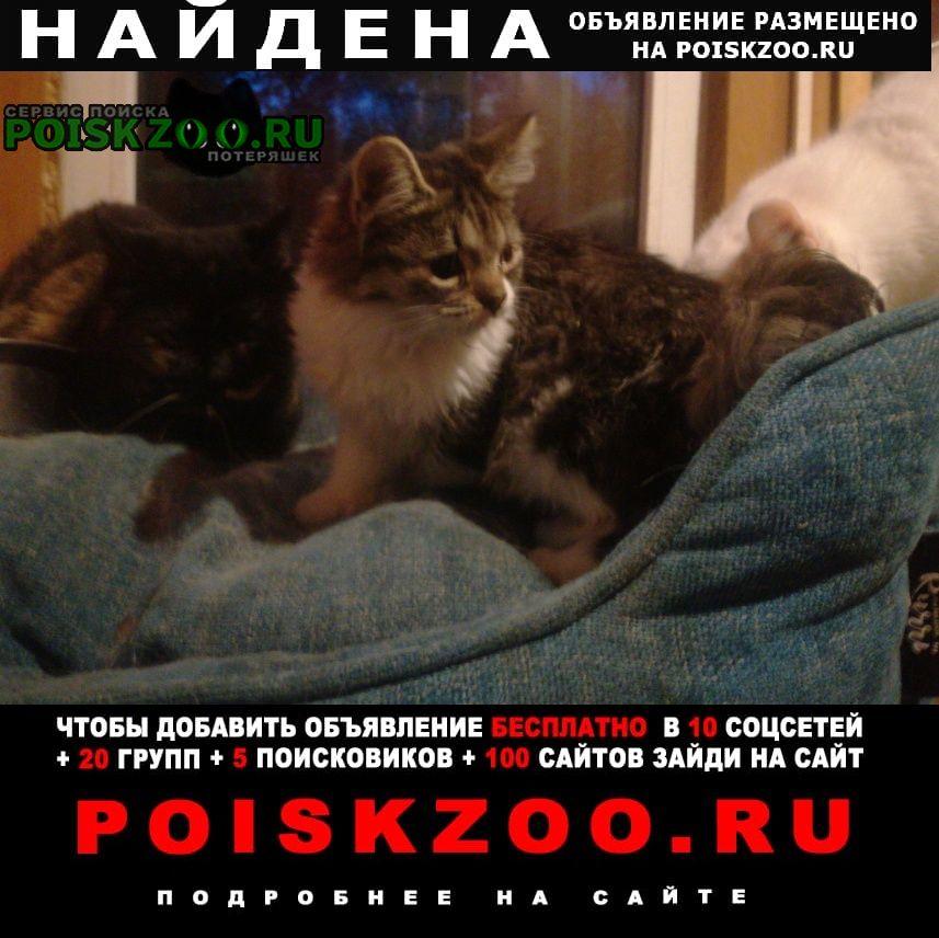 Найдена кошка Подольск