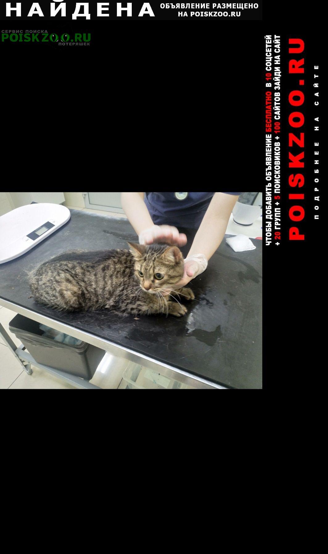 Найден кот в пуршево Балашиха