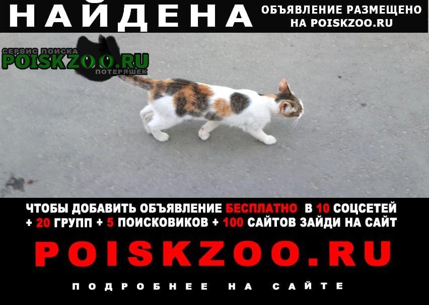 Найдена кошка Высокая Гора