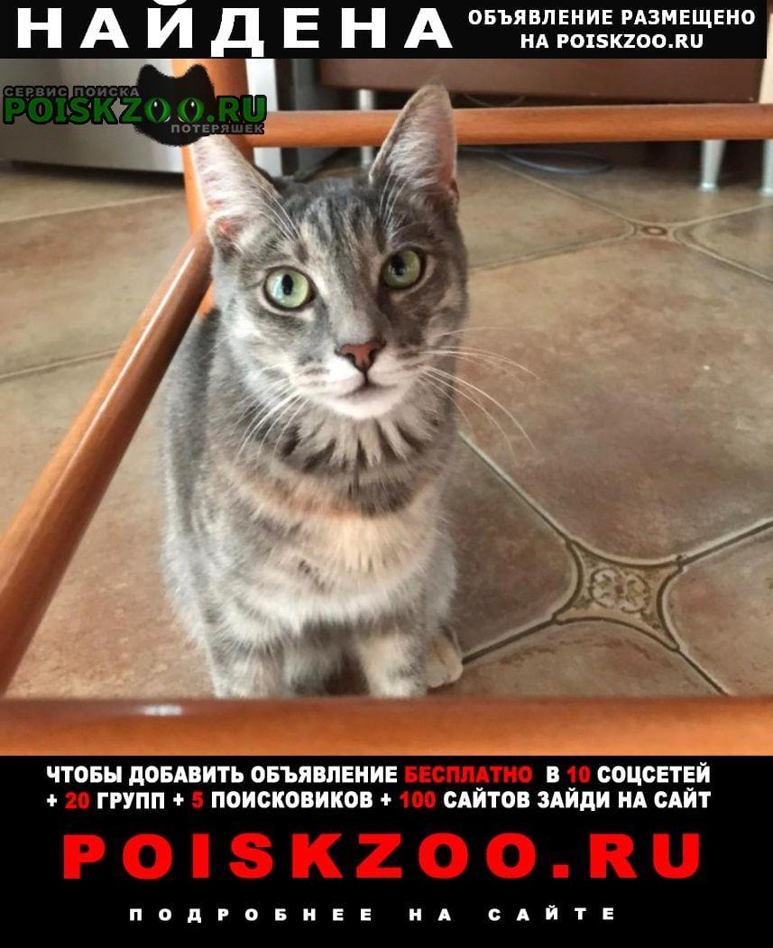 Найдена кошка молодая строгино Москва