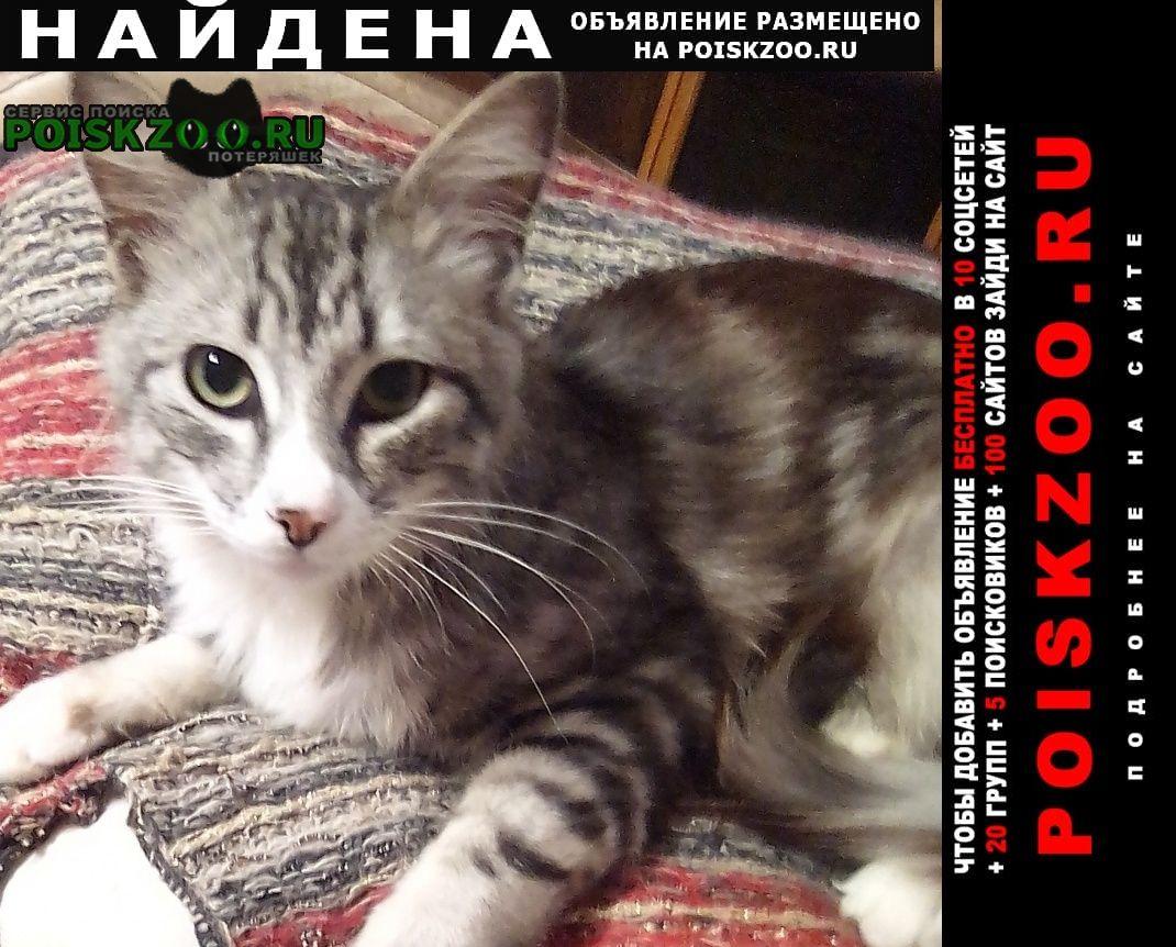Найден кот молодой Севастополь