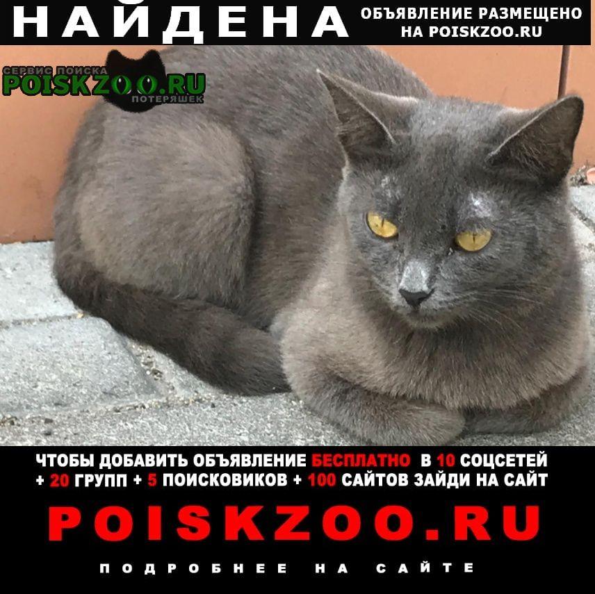 Найдена кошка Санкт-Петербург